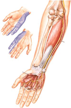 Массаж при защемление в локтевом суставе дисплазия локтевого сустав